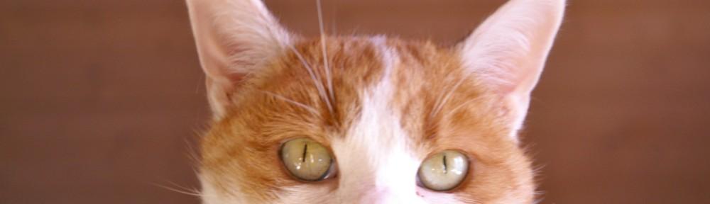 catterel