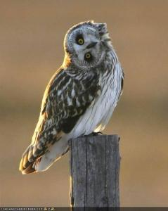 OWL[2]