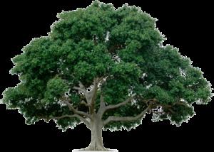 bristol-tree-surgeon-two