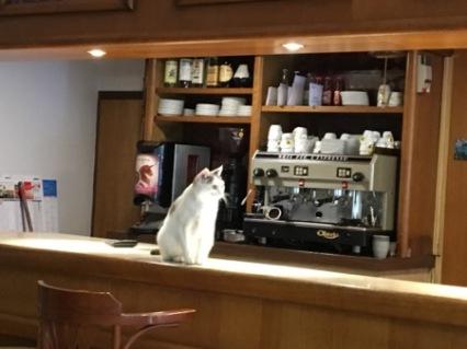 Cat in café